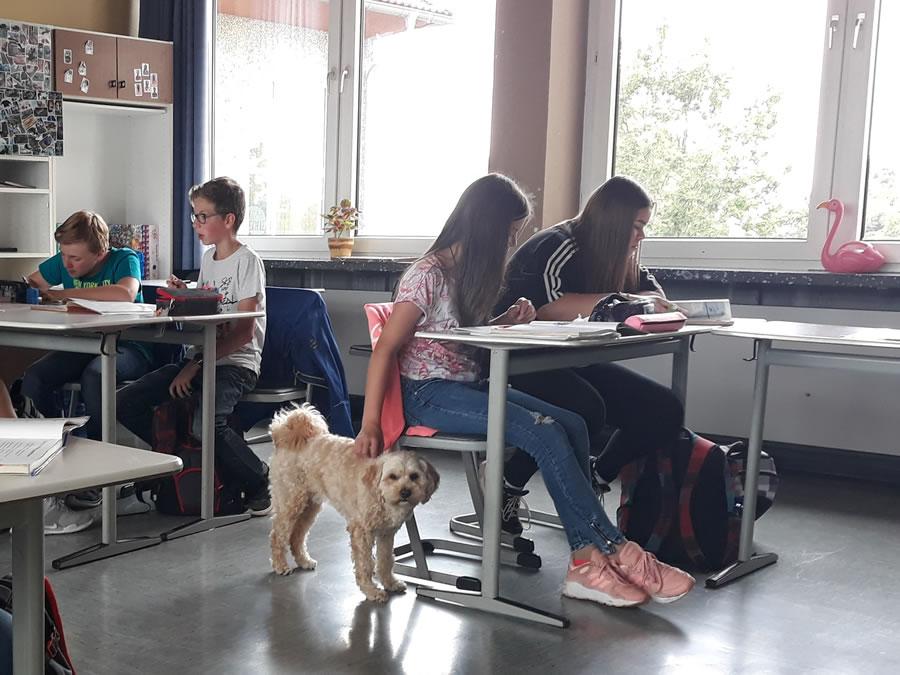 Schulhund Mika im Klassenraum1