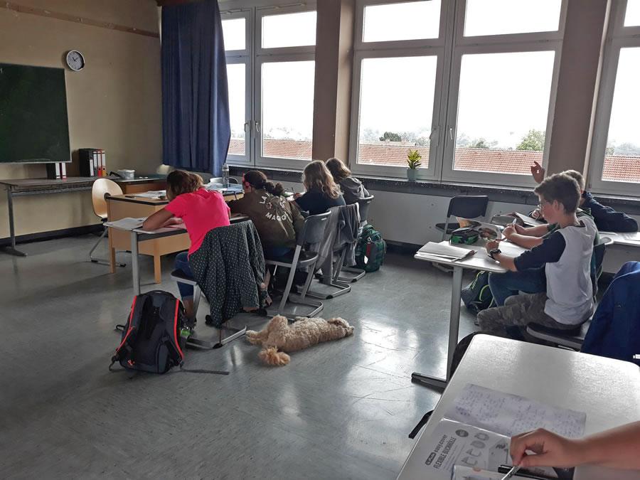 Schulhund Mika im Klassenraum2