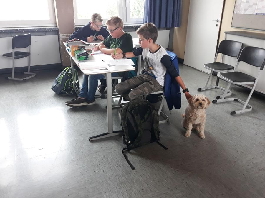 Schulhund Mika im Klassenraum3
