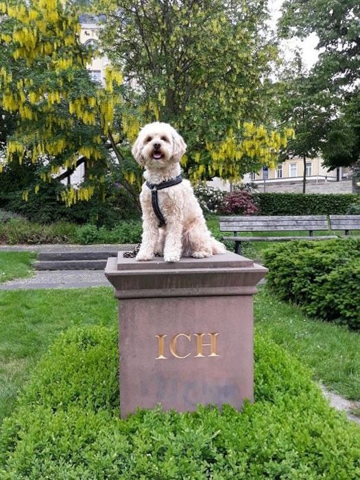 Schulhund Mika